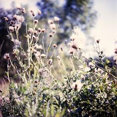 Hainich National-Park (somekeepsakes) Tags: 120 6x6 tlr film nature analog forest mediumformat germany square deutschland nationalpark lomo europa europe natur lubitel analogue lubitel166 wald twinlensreflex quadratisch push1 2011 mittelformat hainich lomographycn100