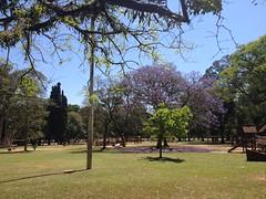 Ibirapuera (Ronaldo Miranda, compositor) Tags: ibirapuera parque park jardins paisagismo ecologia natureza burlemax brasil sopaulo 2016