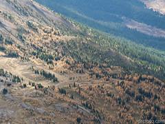 Larch and fir forest (David R. Crowe) Tags: animal birds landscape laridae mountain nature outdooractivities scrambling kananaskis alberta canada