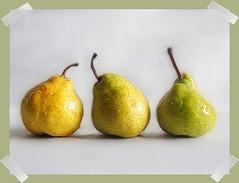Pear Portrait (PrunellaCara) Tags: pears fruit stilllife portrait closeup