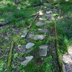 A path wanting walking.      #518life #518 #518fam #518strong #mountain #hike #nature #outdoors #asdf88 #iheartnewyork #newyork #upstateny #iloveny #getoutside #scenic #TRAV3LR #stone #path #stonepath (malcolmpk88) Tags: instagramapp square squareformat iphoneography uploaded:by=instagram 518life 518 518fam 518strong mountain hike nature outdoors asdf88 iheartnewyork newyork upstateny iloveny getoutside scenic trav3lr stone path stonepath