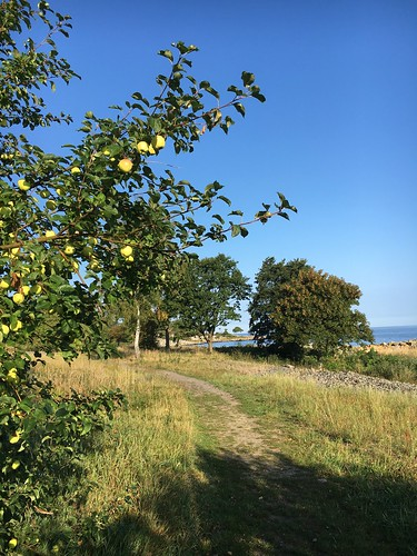 Autumn Apple Bornholm