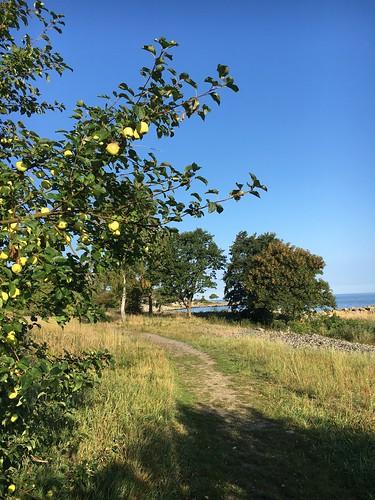 Autumn Apple Bornholm