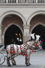 Do they come from a fairyland? (BeeFour1) Tags: travel tourists marketsquare city town horses outdoor