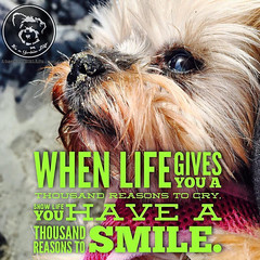 Thanks to my Yorkie, I always have thousand reasons to smile.... (itsayorkielife) Tags: yorkiememe yorkie yorkshireterrier quote
