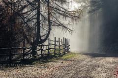 Oasi Zegna (beppeverge) Tags: alpi beppeverge bielmonte landscape mist nebbia novembre oasizegna paesaggio panoramicazegna prealpibiellesi