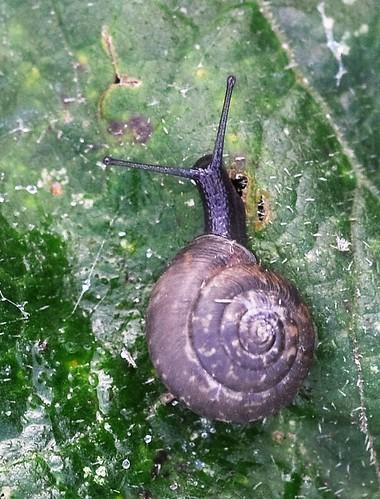 Snail 3. HSS!