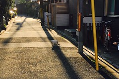 Today's Cat@2016-11-05 (masatsu) Tags: cat thebiggestgroupwithonlycats catspotting cameraphone apple softbank iphone
