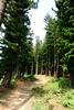 DSC02644 (Nai.) Tags: sonyrx100 taiwan taichung asia nature plants trees treeporn green greenness pine pinewoods