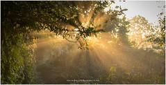 Sunrays, Netherlands (CvK Photography) Tags: mist canon color cvk enschede europe fog landscape nature netherlands outdoor overijssel sun sunrise twente sunray nederland nl