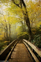 If light is in your heart, (gusdiaz) Tags: nature fall autumn leaves leaf colorful light canon tanawha trail blue ridge mountains parkway secluded relaxing hike hiking