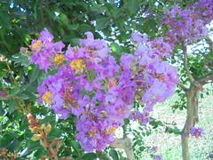 281 (en-ri) Tags: fiorellini little flowers rosa verde foglie leaves sony sonysti arbusto alberello