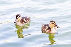 ? (bramvanderzanden) Tags: wildlife animal bird tervuren belgium