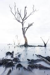 Serenity (bdrc) Tags: asdgraphy banting dead tree branch sea shore water pantai kelanang sony a6000 tokina 1116 ultrawide nd filterlong exposure landscape evening white clean minimalistic athabasca