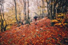Rainy day in autumn (cuellar) Tags: autumn forest landscape people rain red trees umbrella walk riofroderiaza castillaylen spain es