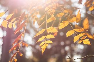 Jesen je najbudalastija tuga među tugama.