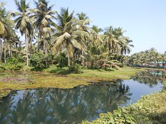 Villages Near Calicut Kerala Photography By CHINMAYA M (10)