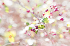 100X 2016 - 76/100 - Photos with the Lensbaby (norasphotos4u) Tags: 100x2016 canon6d fall flowersplants lensbaby skylinedrive social trees noraleonard