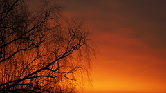 Magic Morning (jurgenkubel) Tags: soluppgng trd baum sonnenaufgang sunrise tree