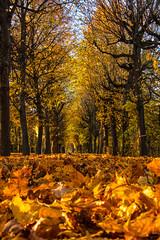 Schnbrun (saschadorn) Tags: laub herbst bltter bume allee schnbrunn autumn