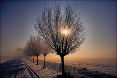 Zeerijp en mist (TeunisHaveman) Tags: sunset snow winter winterlandscape trees dutchlight hollandslicht geotagged geotag outdoor thenetherlands light licht dutchphoto lucht sky dutch dutchlandscape hollandslandschap landscape landschap sunlight