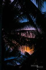 Sunset, Krui, Sumatra (Rocio taburelli) Tags: sunset beach sumatra surftrip surfphotography palmtree palmeras indo indonesia paradise sea seaside sky colours sun sunrise