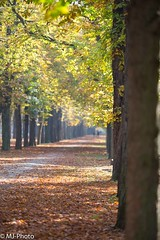 Herbst (MJ-Photo.at) Tags: wien vienna prater herbst autumn natur nature outdoor foto photo photography canon eos child kind tochter trees sun