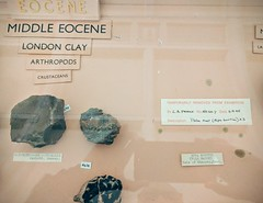 Temporarily removed (neil cummings) Tags: hornimanmuseum eocene temporarilyremoved museum atifact fossil evidence
