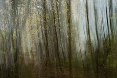 The ghosts of trees (Suzanne.Russell) Tags: intentionalcameramovement multipleexposures trees woodland autumn