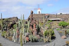 Archipel des Canaries - Lanzarote - Guatiza 194