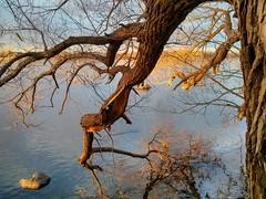 Nature's art (angelinas) Tags: arbres nature waer water arbre arbelo natura rivers riverside branches arbeli paesaggi paysages