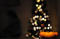Transitions (mjh0718) Tags: canon 50mm christmas tree pumpkin pumpkins holiday transition rebel t5i bokeh fall