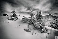 snow clouds (gregor H) Tags: winter snow christmas tree mountain alp slope skiing sonnenkopf arlberg austria vorarlberg fresh untouched