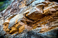 But the wood is tired and the wood is old (OR_U) Tags: 2016 oru uk wales wood tree decay texture macro closeup swampophelia bokeh