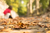 39/52 Otoño (Nathalie Le Bris) Tags: fall otoño autumn automne hoja feuille leaf bokeh dof
