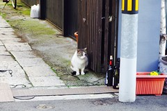 Today's Cat@2016-12-05 (masatsu) Tags: cat thebiggestgroupwithonlycats catspotting pentax mx1 osaka