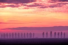 Tree Line Sunset 02 (Photograferry) Tags: sunset trees treeline evening twilight dusk landscape thefens cambridgeshire clouds red colourful scenics beautyinnature nopeople outside mist fog