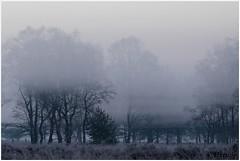 Misty and cold (HP019825) (Hetwie) Tags: natuur frost ijs heather nachtvorst ice zonsopkomst kou rijp nature sunrise ochtend strabrechtseheide strabrecht frozen vorst heide lierop noordbrabant nederland