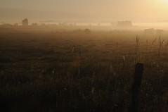 Im Morgen-Nebel - in der Treene-Niederung; Norderstapel, Stapelholm (24) (Chironius) Tags: stapelholm norderstapel schleswigholstein deutschland germany allemagne alemania germania германия niemcy nebel gegenlicht landwirtschaft morgendämmerung sonnenaufgang morgengrauen утро morgen morning dawn sunrise matin aube mattina alba ochtend dageraad zonsopgang рассвет восходсолнца amanecer morgens dämmerung fog brouillard niebla