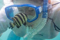 20150808-DSC_4836.jpg (d3_plus) Tags: sea sky fish beach japan scenery underwater diving snorkeling  shizuoka    apnea izu j4  waterproofcase    skindiving minamiizu       nikon1 hirizo  1030mm  nakagi 1  nikon1j4 1nikkorvr1030mmf3556pdzoom beachhirizo misakafishingport  1030mmpd nikonwpn3 wpn3