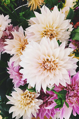 227/365 (moke076) Tags: pink dahlia flowers flower color nature oneaday mobile freedom petals farmers market cellphone cell fresh photoaday local bouquet 365 bud budding iphone 2015 project365 365project vsco vscocam