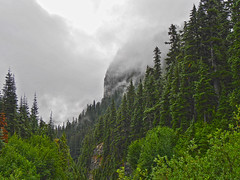 po1260229mistyMorning (thom52) Tags: fog mt gap rainier thom summerland wonderland panhandle marmots chipmunks ohanapecosh wsweekly149