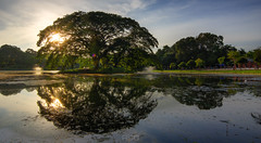 Sphere (bdrc) Tags: landscape scenery asdgraphy lake tree sunset golden hour tokina 1116 reflection sphere mirror