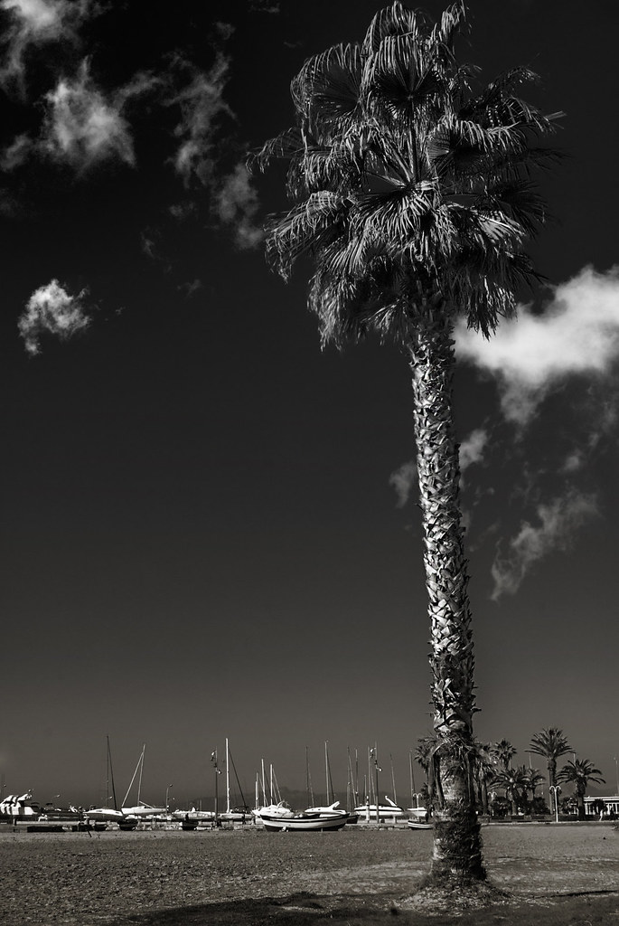 palm trees tumblr vertical. 07/15/15 F14; 1/640s; ISO 400; FL: Palm Trees Tumblr Vertical