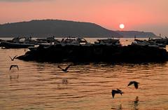 Sunrise from my beach (Lorenoir) Tags: sea summer sun love beach sunshine birds sunrise island landscapes pentax calm september ischia lovenature calmsea ischiaponte isoladischia pentaxiani pentaxk50 sunriseatmosphere