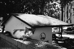 (Abdallah A. Mansour) Tags: blackandwhite bw cats monochrome animal animals cat canon turkey geotagged eos places istanbul stray kodaktrix400 presets 550d vsco