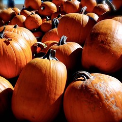 Pretty pretty #pumpkins. Each one a blank canvas. So many possibilities that I'm inclined to leave them plain. (momfluential) Tags: leave that one pretty im many pumpkins canvas blank them plain each possibilities inclined so