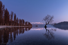 The Wanaka tree (inzianand) Tags: trip camping newzealand vacation nikon memories roadtrip southisland leisure 24mm samyang d810