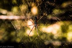 Spider Home (Arun Solomon) Tags: india color green bird net home composition zoo spider nikon leg bangalore tropical karnataka six tamron