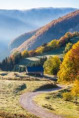 Paysage du Haut Jura (Guillaume PHILIPPE - Photography) Tags: tree nature sunshine automne landscape gold golden soleil or automn jura paysage arbre brume feuille matin haut matinal